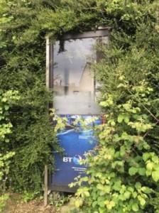overgrown box